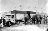 А это специальный грузовик GMC для перевозки слонов - были и такие