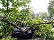 Водитель пострадал от упавшего на машину дерева, фото 1