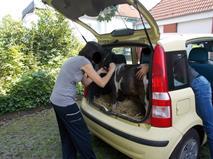 Пони… в багажнике, фото 1