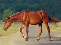Виновницей аварии с шестью жертвами стала лошадь