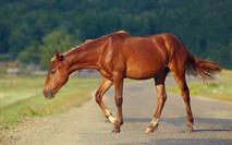Виновницей аварии с шестью жертвами стала лошадь, фото 1