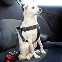 Перевозку животных без удерживающих устройств хотят запретить, фото 1