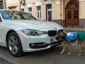 Госдума не одобрила штраф за парковку с закрытыми номерами